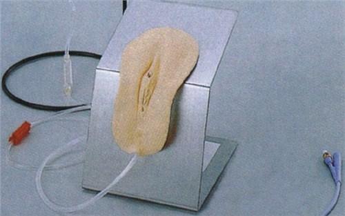女性导尿护理模型
