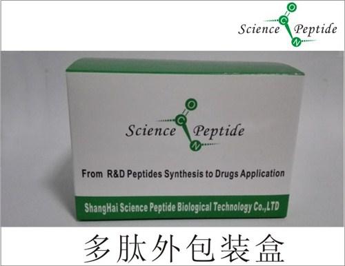 目录多肽供应商