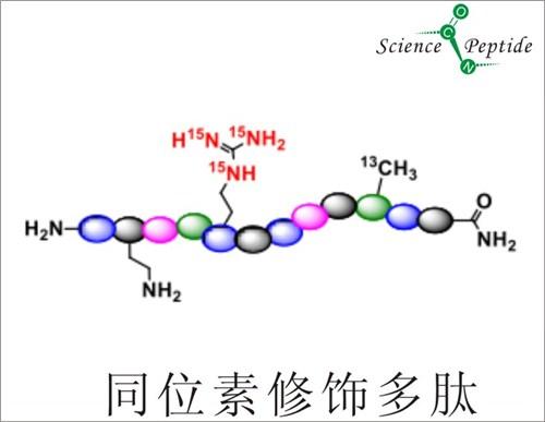 同位素标记多肽厂家