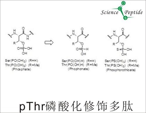 磷酸化修饰多肽厂家