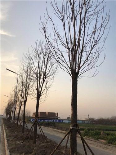 淮阳县易鑫苗木种植专业合作社