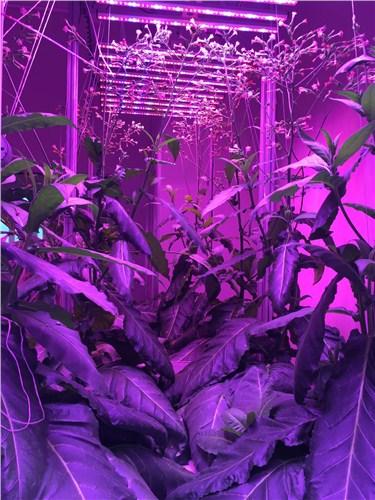 植物种植集装箱
