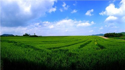 新农村建设,农业园区休闲化升级,农家乐设计,生态农业景观设计等领域