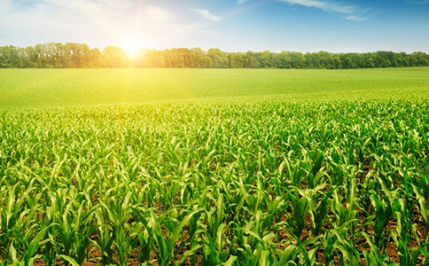 济宁玉米种子种植方法