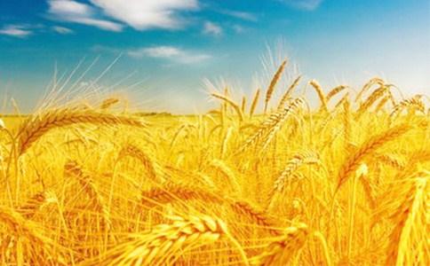 济南小麦种子新品种报价排名