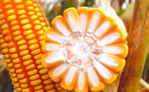 济南优质玉米种子分类