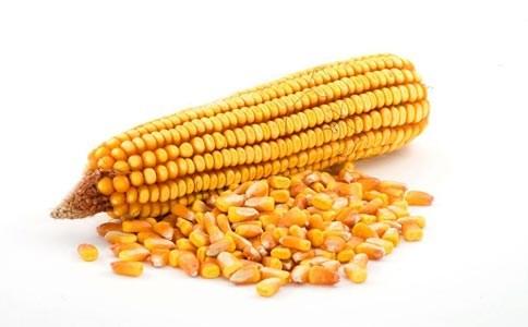济南玉米种子品种挑选