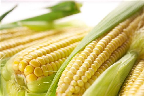 济宁抗病玉米种子品种分类