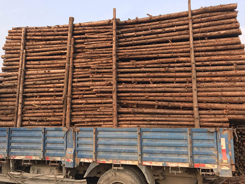 直销杉木支撑杆省钱,杉木支撑杆,郑州优良杉木支撑杆,优良杉木支撑杆价格,直销杉木支撑杆哪家好,优良杉木支撑杆便宜