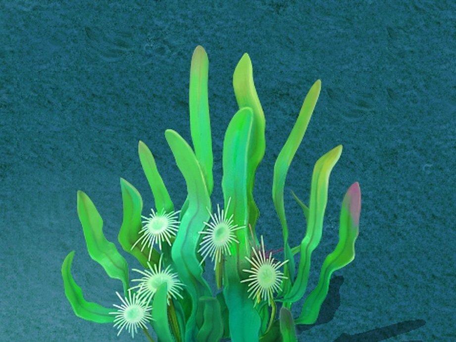 上海藻类鉴定,藻类