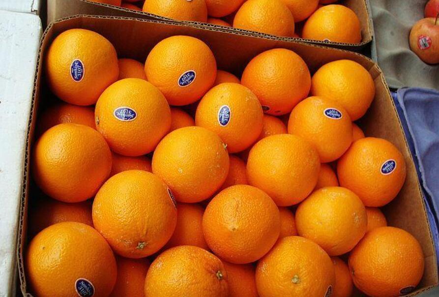 上海水果进口清关公司 佰棠供应