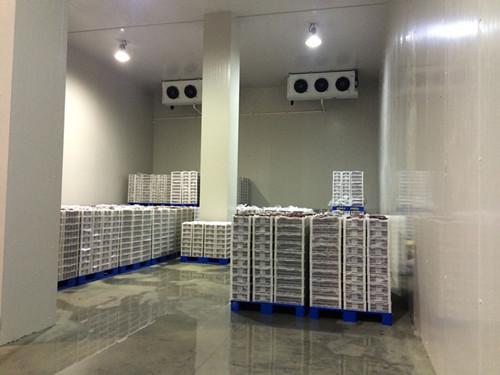 工业冷库制冷机组价格 冷通供应