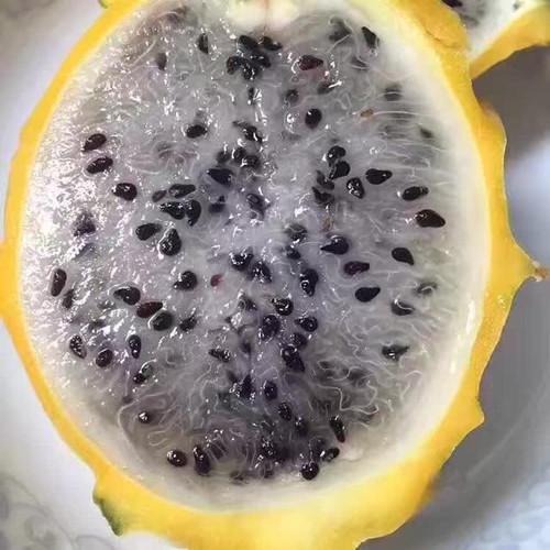 麒麟果幼苗种植技术辅导