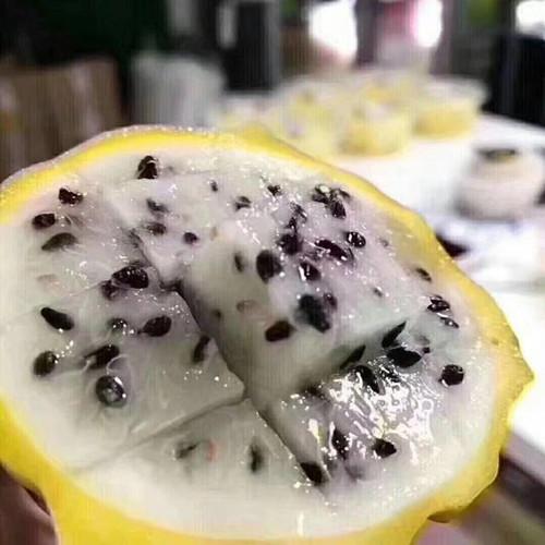 燕窝果种苗种植 厦门耕泓农业科技供应