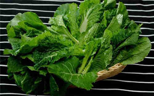 太仓市专业蔬菜供应 苏州禾子生态食品供应