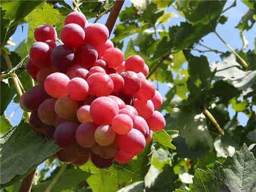 常熟市专业粮油水果多少钱 苏州禾子生态食品供应