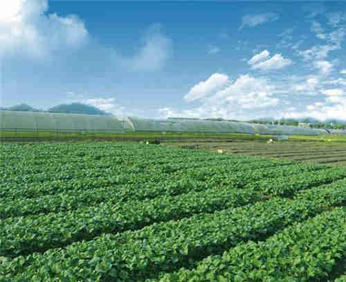 专业供应有机蔬菜批发 苏州禾子生态食品供应
