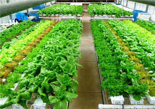 太仓市?#36152;?#26377;机蔬菜 苏州禾子生态食品供应