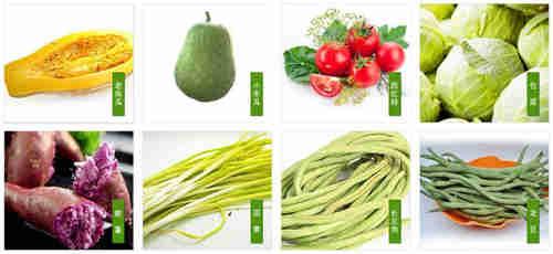 相城区有机蔬菜供应厂家 苏州禾子生态食品供应