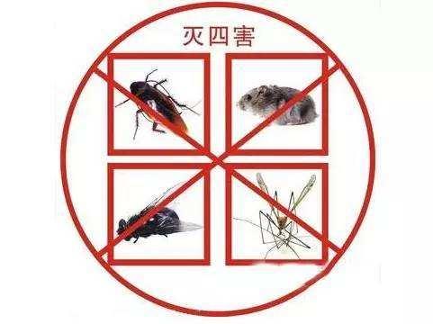 信阳医院苍蝇防治哪家好 北京鹏辉生物科技供应