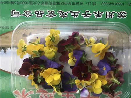 相城區食用花報價 蘇州禾子生態食品供應