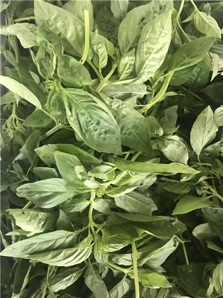 常熟市有机蔬菜厂家供应 苏州禾子生态食品供应