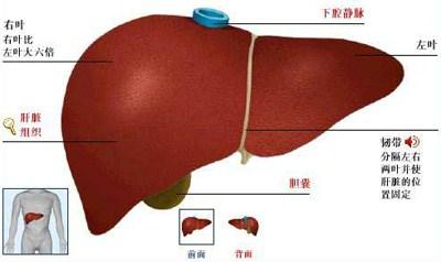 台湾质子癌症治肝炎转癌