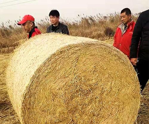 徐州稻草秸秆粉碎