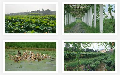 生态小农庄