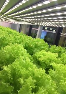 深圳餐厅植物工厂