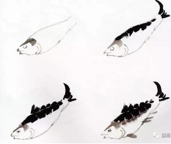 国画鱼的写意画法,国画初学者鱼的各种画法步骤详解
