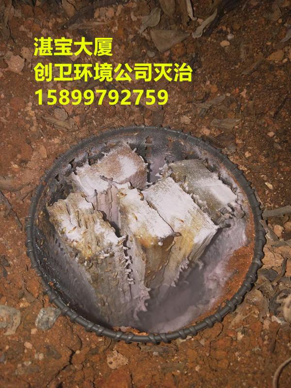 深圳白蚁防治公司哪家比较专业