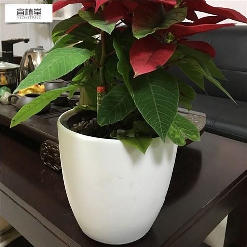 兰州商业办公室盆景盆栽制作摆放位置