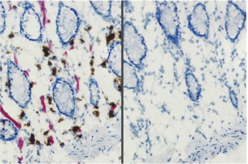 BLOXALL内源性过氧化物酶和碱性磷酸酶封闭液
