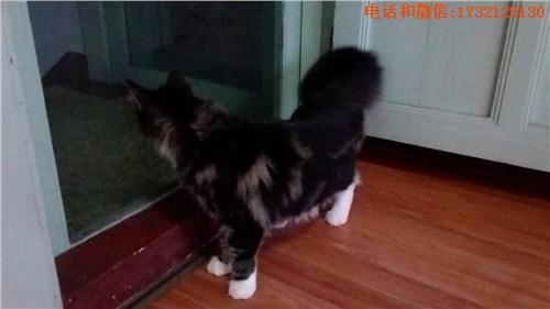 小可爱猫舍(个体经营)