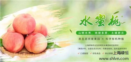 上海桃树领种